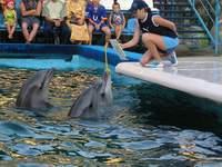 Дельфинарий. Одесса