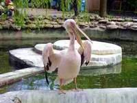 Зоопарк. Одесса